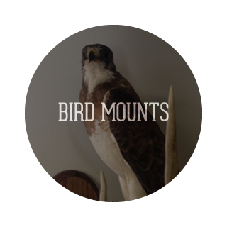 Bird Mounts