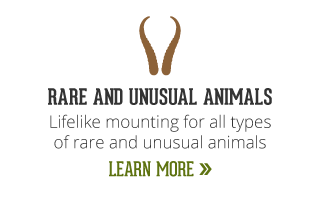 rare and unusual animals | lifelike mounting for all types of rare and unusual animals