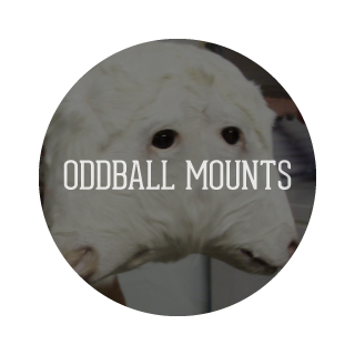 Oddball Mounts