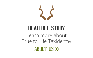 read our story | learn more about true to life taxidermy | about us