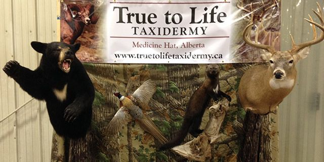 true to life taxidermy stand